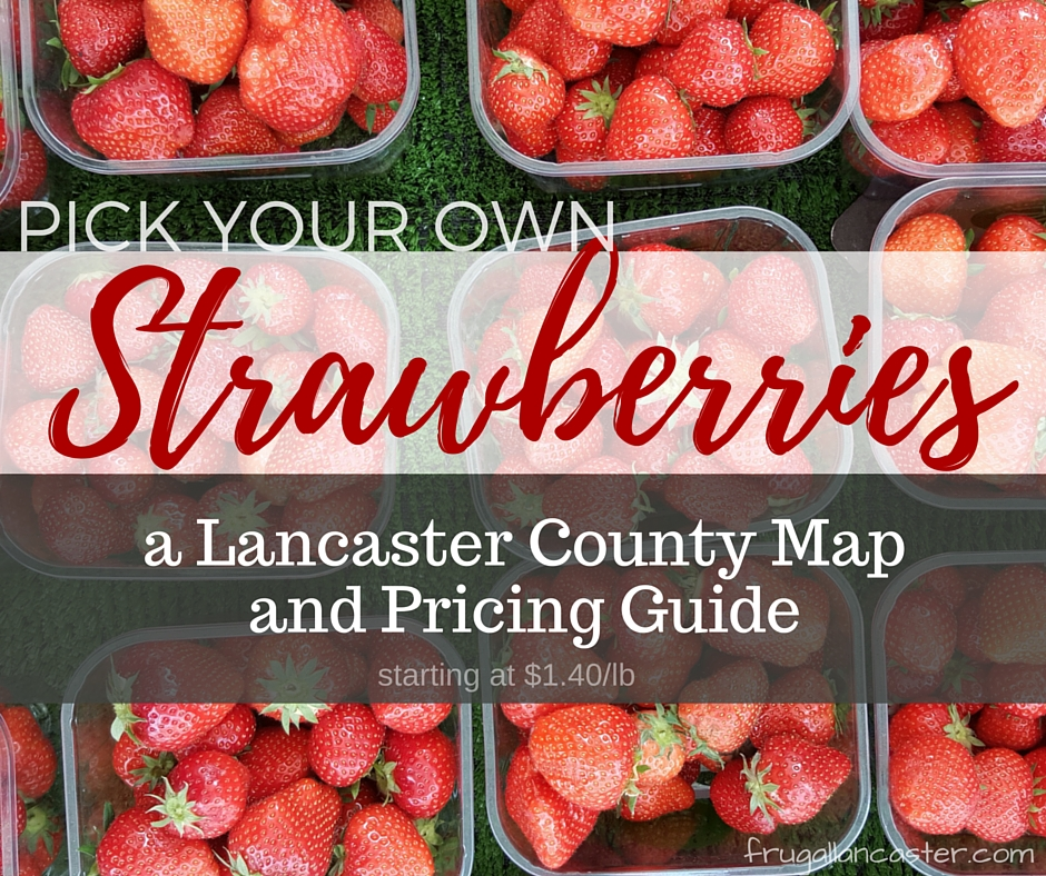 Pick Your Own Strawberries In Lancaster County — A Google Map and Pricing Guide (from $1.40 to $3.99/lb)
