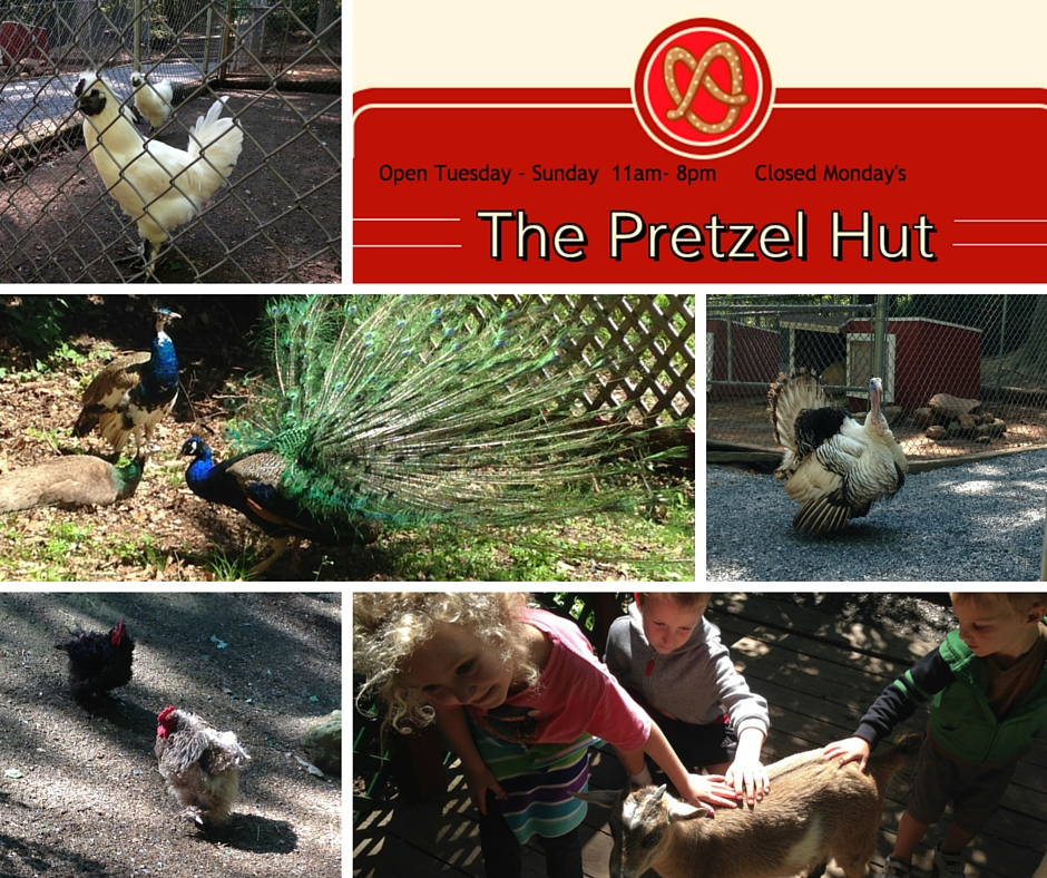 pretzel hut petting zoo
