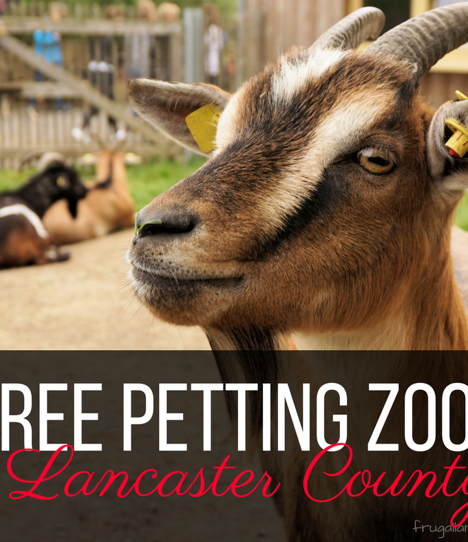 FREE Petting Zoos in Lancaster County