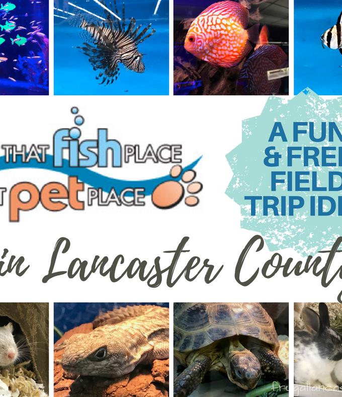 That Fish Place That Pet Place: A Lancaster County Field Trip Idea