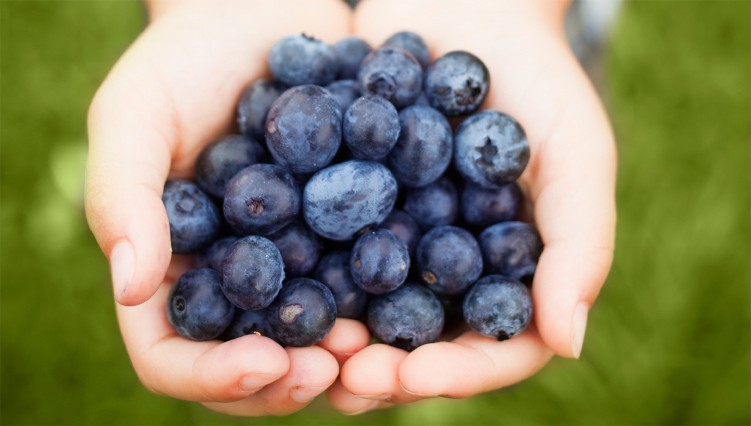 Best Lancaster County Price on Blueberries - Frugal Lancaster
