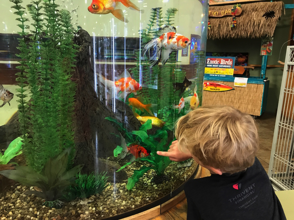 That Fish Place That Pet Place: A Lancaster County Field